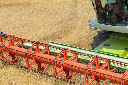 Harvester at work on the field harvesting ripe wheat