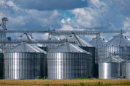 Grain elevator silos near the wheat field