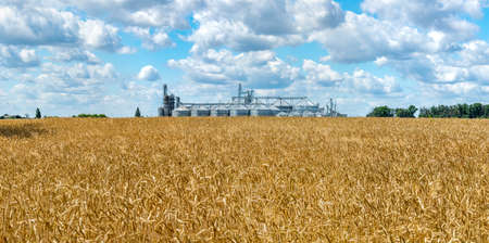 Panorama of the field of ripe wheat and elevator silos on the background Stock Photo