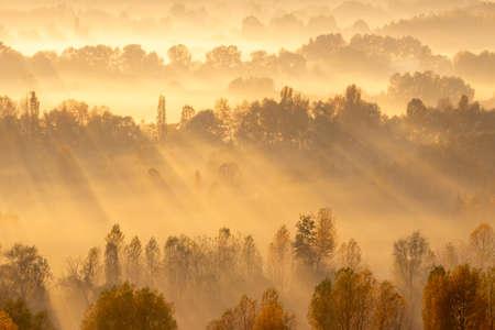 Rays of sun between the trees on sunrise in fog Stock fotó