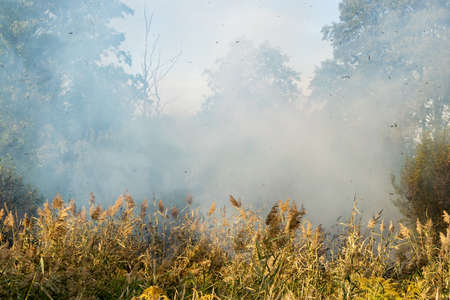 Peatland fires raging in early autumn