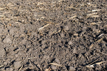 Soil on the field covered with mineral fertilizer pellets closeup texture