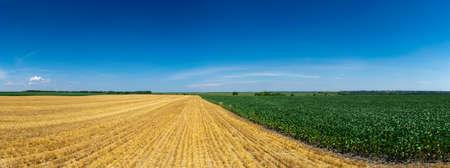 Field in summer landscape panorama