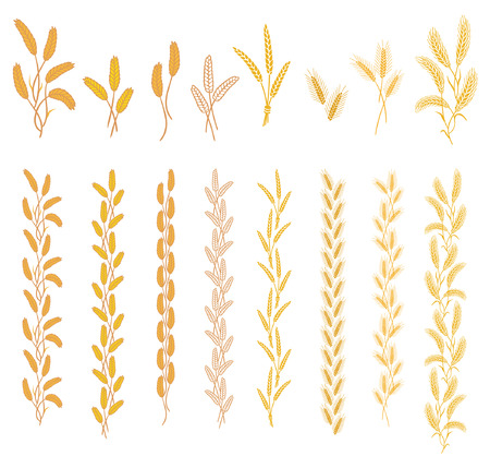 Ripe ears of cereal plants. Set of ornaments from different ears in one and two colors Illustration