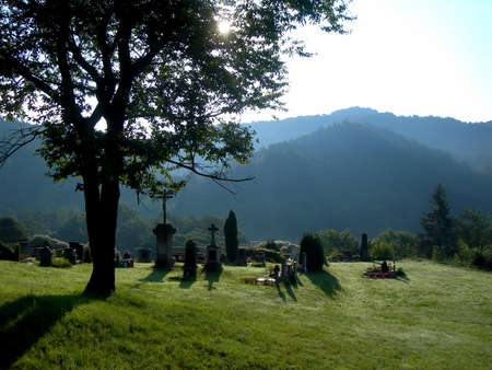 Small peaceful cemetery below the great oak in the morning