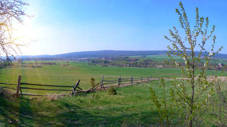 Panoramic landscape of spring field with a blooming tree           Reklamní fotografie
