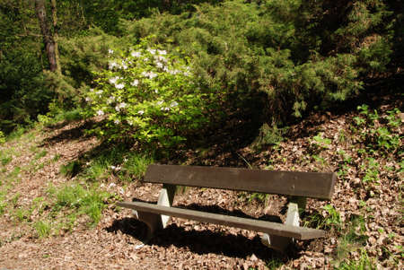 Bench in the park with blooming flowers