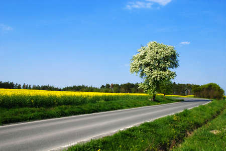 Yellow rape, blue sky and fruit trees in blossom in the spring country Stock Photo - 17721698
