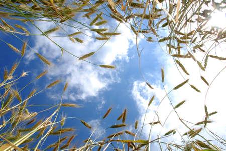 bellow: Mirando el cielo y el campo de cebada desde abajo