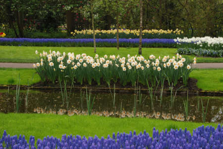 Vivid flower fields in Holland in the spring