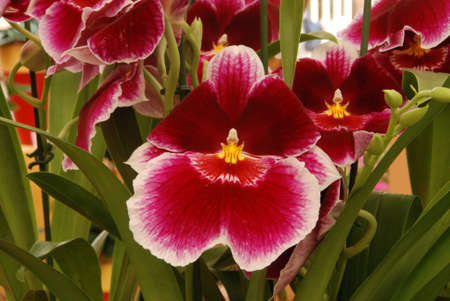 exotic flower: Beautiful exotic flower - orchid blooms