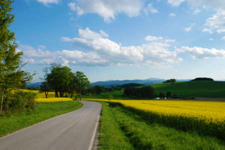 Road in the country and blooming rape field in the spring photo
