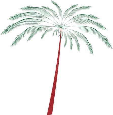 dattelpalme: Palm Baum mit �sten Illustration