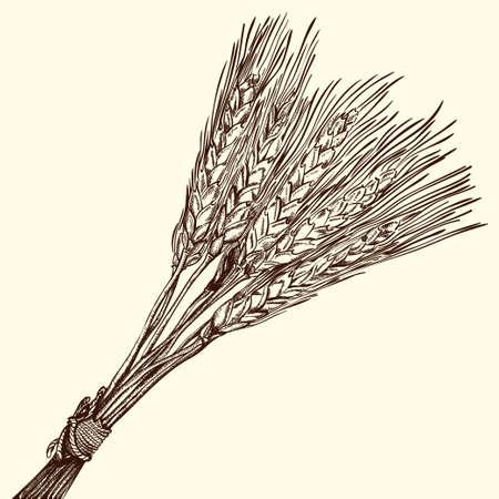 sheaf: Bunch of Ripe Wheat Engraving
