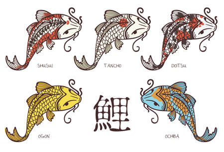 Koi carp breeds classification, with japanese hieroglyph  Vector