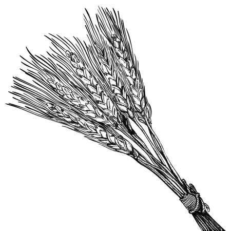 熟した: 熟した小麦の彫刻  イラスト・ベクター素材