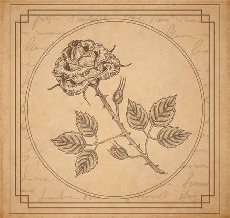 poems: Vintage old paper texture with frame and engraved slyle rose and handwriting letter poems background, scrapbooking victorian style page, hand drawn vector illustration