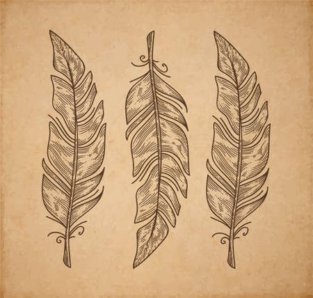 Three vector bird feather isolated on white, engraving style decorative elements for design Vector