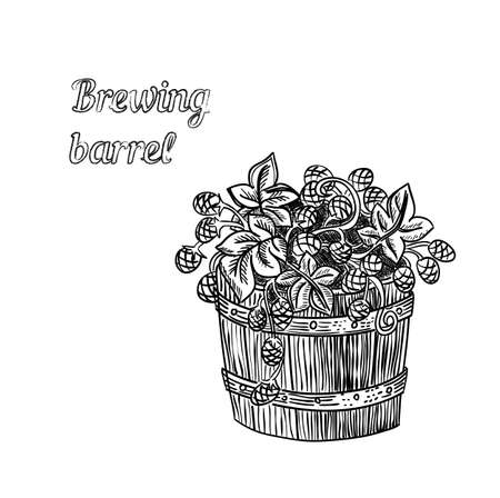 sheaf: Vector illustration of hand drawn barrel of hop - engraved illustration style detailed drawing for brewing and harvesting theme
