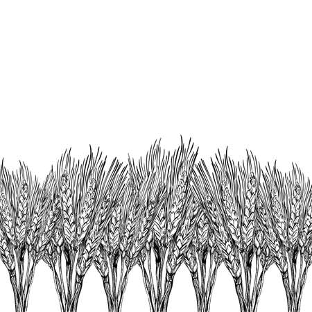 Vector background with engraved field of wheat, hand drawn illustration in vintage style Vector