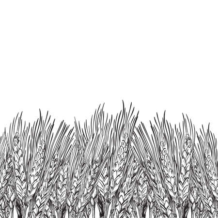 background with engraved field of wheat, hand drawn illustration in vintage style Illustration