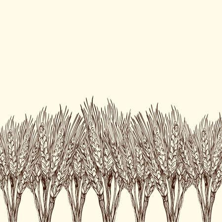 cosecha de trigo: fondo con el campo grabado de trigo, ilustración dibujados a mano de estilo vintage Vectores