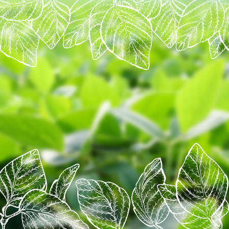 soy: Vector illustration of white digital hand drawn soy plant leaves on blur realistic background of green soy field - vegan background template Illustration
