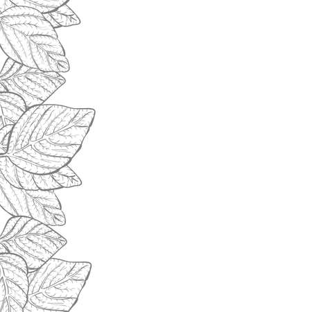 black borders: Vector background - nature foliage leaves border frame with copy space and white backdrop, black and white Illustration