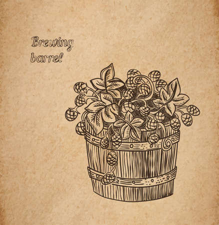 brewing: Vector illustration of hand drawn barrel of hop - engraved illustration style detailed drawing for brewing and harvesting theme