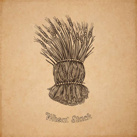 picked: Vector illustration of hand drawn stack of wheat - engraved on old paper illustration style detailed drawing for brewing and harvesting theme Illustration