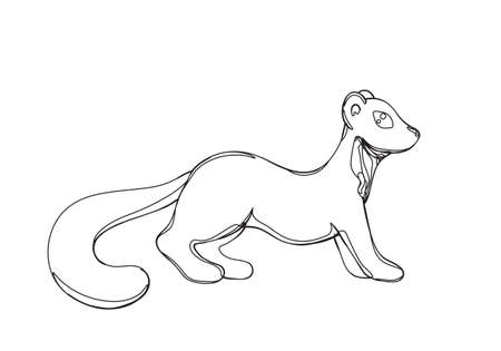 illustration of pine marten in continuous line graphic style, black contour outline sketch isolated on white Ilustracja
