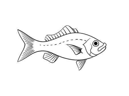 Red snapper fish illustration in vintage naturalistic style vector animal isolated on white