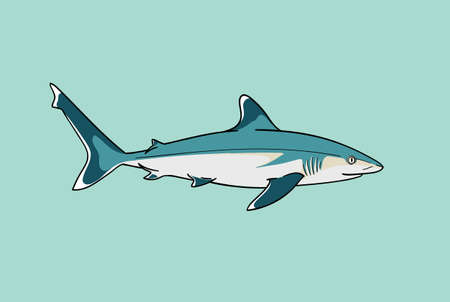 Silvertip shark fish predator swimming in ocean water vector zoological naturalistic color illustration Ilustrace