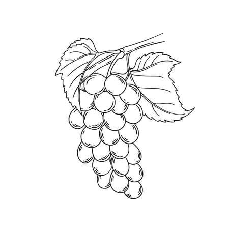 Vite illustrazione vettoriale contorno nero disegno isolato su bianco pagina da colorare frutta con foglie di ramoscello e bacche