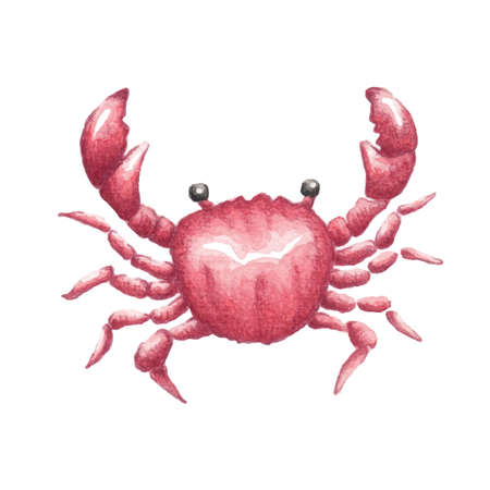 Vector crab watercolor illustration Ilustração Vetorial