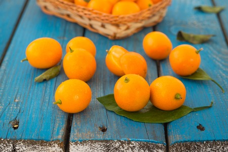 Cumquat or fortunella wild orange fruits with green leaves on blue rustic wooden table closeup