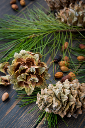 Resinous husked pine-cones with pine nuts, needles and pine branches on dark wooden background