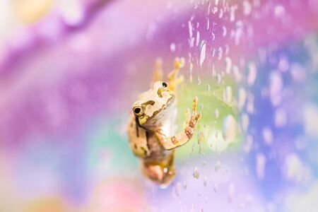 Cute frog on a rainy day on a vending machine