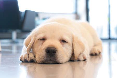 잠자는 강아지