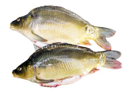 carp fish Stock Photo - 11679144