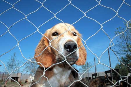 perro asustado: Un perro atrapado en un refugio de animales