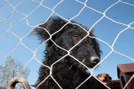perro asustado: Refugio de Animales