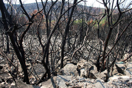 Environment disaster after big fire at Lustica, Montenegro
