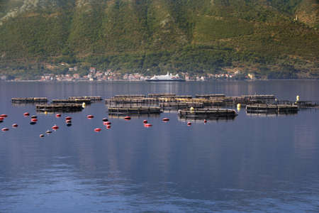 Oyster production in Montenegro