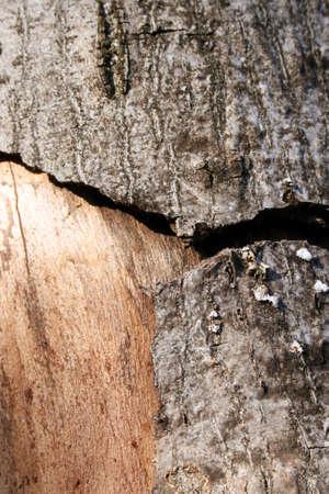 Wood disease, problematic infection of tree bark Standard-Bild