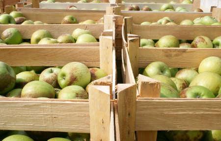 Fresh fruit, apples from garden in wooden crates, autumn harvest