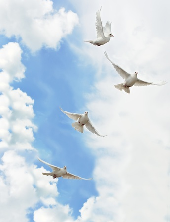A group of white doves flying in the sky photo