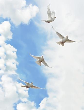 fede: Un gruppo di colombe bianche che volano nel cielo