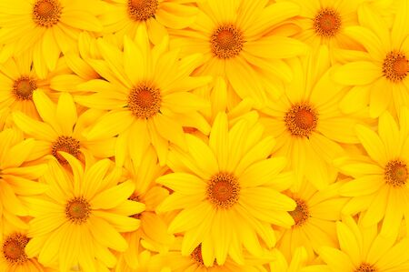 Beautiful floral yellow background photo