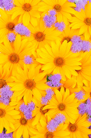 Floral yellow and purple background Stock Photo